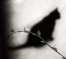 The Black Cat by twicemood