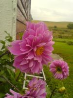 Flowers on the farm by jimmyselix
