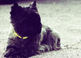 The dog with a yellow collar by BambisLogic