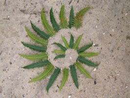 Fern leaf spiral by Dishtwiner