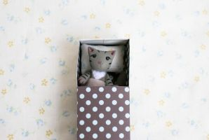Tabby cat in a matchbox by freedragonfly