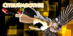 CitruSmoothie Header Entry - Updated by KnifeHappyPsychopath