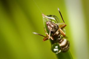 The ant and the waterdrops by Deformity