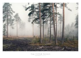 Fog Filled Forest by Stridsberg
