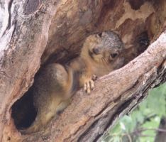 Squirrelamation 2a by Windthin