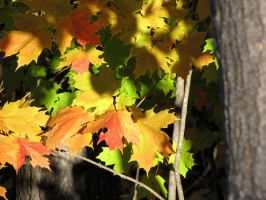 more color leaves by Nipntuck3