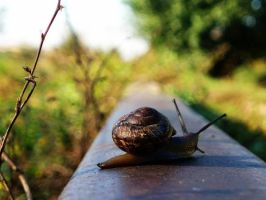 Snail acting train by amisiux