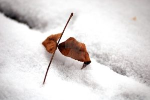 Winter and Autumn by exarobibliologist