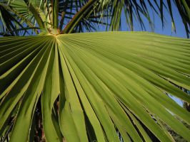 palm palm emphatic palm by DigitNe