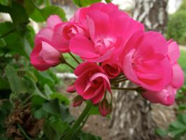pink flower stock 02 by hp-abrasion