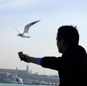 person and pigeon by zehracldgn