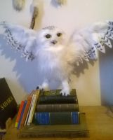 Hedwig ready for Take Off by Kreativjunkie