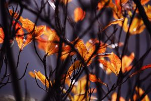 Leaves by LisiTisaKi