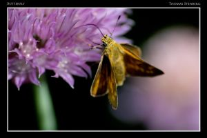 Butterfly 1 by tomba76