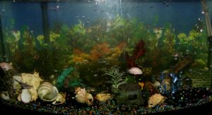 Fishtank 2012 by DKayCrafts