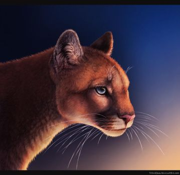 Mountain Lion Redo by FelonDog