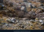 Geothermal Zone 05 by kuschelirmel-stock