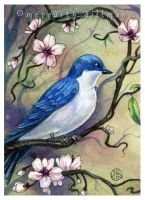 Tree Swallow w Blossoms ACEO by MeredithDillman