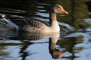 The Finest Ripples by WestLothian