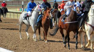 Racehorse Stock 21 by Rejects-Stock