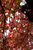autumn leaves V by serasfan