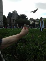 Feeding the birds at Notre Dame by MollyMotions
