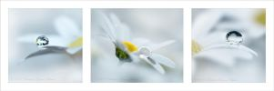 white beauty by dini25