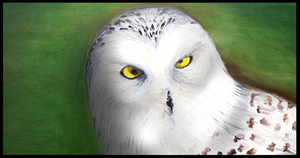 arctic owl  oil painting by melrose86