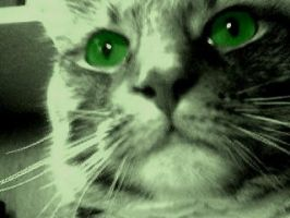 Green eyes. by xpinned
