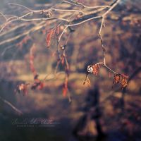 Smells like Autumn by otherw0rld