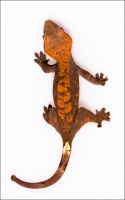 Spider Gecko, Spider Gecko... by CamStatic
