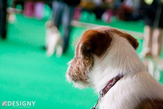 Jack Russel Terrier :: Learning from the best by Designy