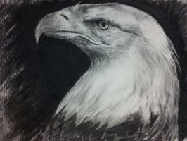 Eagle Eye by TuApUi