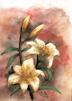 Lilies II by doma22
