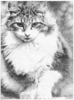 Maine Coon Grid-drawing by kiracatgirl