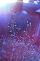 Violet Dreams by KatherineDavis