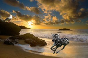 Zebra Racing Along The Beach by tundrawolf2223