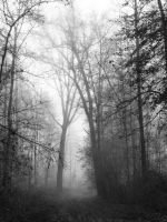 Foggy Forest by Caillean-Photography