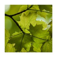Green Leaves by mARTinimal