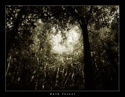 dark forest by fxcreatography