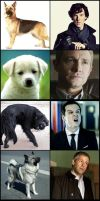 The Dogs of BBC Sherlock by OrminLange