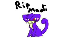 Rip Madi the rattata by X-CoyoteFeathers-X
