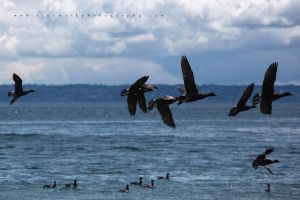 Flocking Behavior by TruemarkPhotography