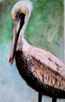 Brown Pelican by TunaPhishes