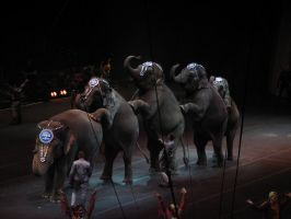 circus by smilesmile1978