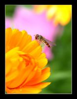Fly and flower by Woolf20
