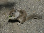 squirrely by aliciachristine86