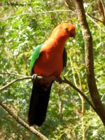 King Parrot by BreeSpawn