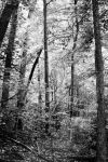 the woods by fotomademoiselle