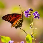 Butterfly having a snack by isotophoto